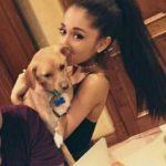 Ariana Grande pet Toulouse