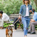 Jennifer Lopez's pet Boxer