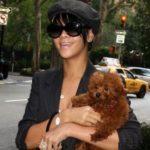 Rihanna's pet