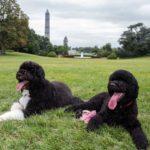 Barack Obama pets