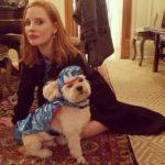 Jessica Chastain pet