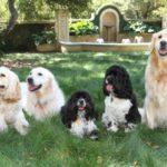 Oprah Winfrey pets