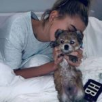 Hailey Baldwin pet