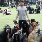 Daniel Radcliffe with his 12 pet dogs
