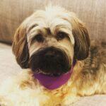 Emily VanCamp pet dog image