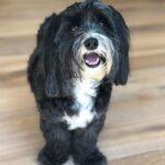 Miranda Cosgrove pet dog image