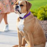 Joc Pederson's pet dog