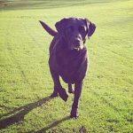 Sam Billings's pet dog