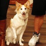 Kevin Zeitler's pet dog