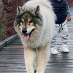Evan Fournier's pet dog