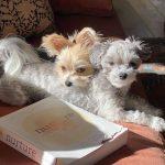 Ashley Tisdale pets