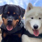 Jason Heyward's two pet dogs