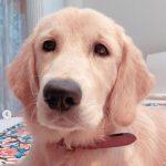 Sourav Ganguly's pet dog