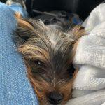 Dalila Bela's pet dog