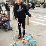 Howie Mandel with his pet dogs