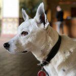 Jon Huertas's pet dog