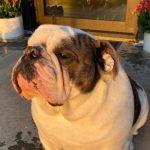 Julia Garner's pet dog