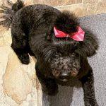 Lauren Holly's pet dog