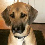 Gage Munroe's pet dog