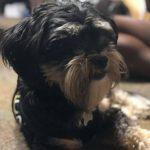 Tamyra Mensah Stock's pet dog